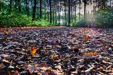 Bosweg in de herfst bedekt met bladeren. Zonneschijn door de boomtoppen van 77pixels