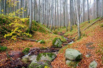 Waldblick im Herbst van Steffen Schöne