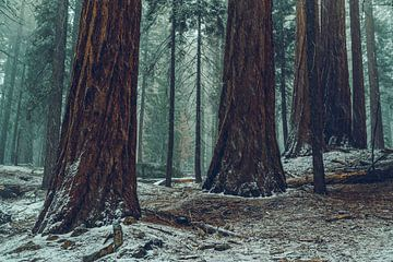 Misty matins sur Joris Pannemans - Loris Photography