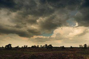 Heidelandschap na een zomerse regenbui