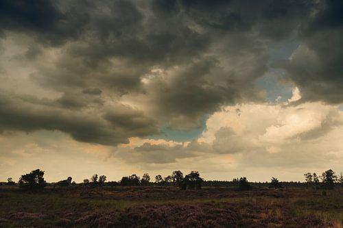 Paysage de bruyère après une averse d'été