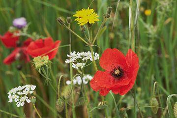 Colorful flower meadow  van Gunter Kirsch