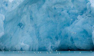 Drieteenmeeuwen zwemmend voor een gletsjer van AGAMI Photo Agency