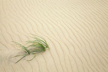 Gras in het zand van BVpix