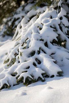 Verschneite Bäume in einer ländlichen Naturkulisse | Fine Art Photo Print | Poster von Karijn Seldam