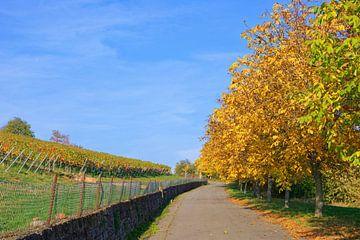 At the Vineyard in Autumn van Gisela Scheffbuch