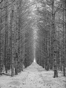 Der dunkle Wald von BHotography