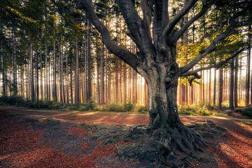 Der Märchenbaum von Ton Drijfhamer