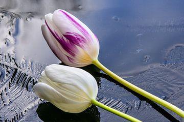 Tulpen op het ijs van JM de Jong-Jansen