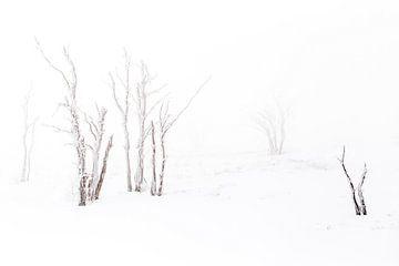 Winter op de Hoge Venen von Antwan Janssen