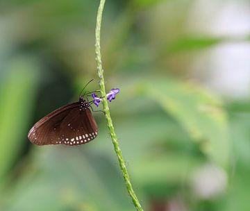 Vlinder von Krijn de Haas