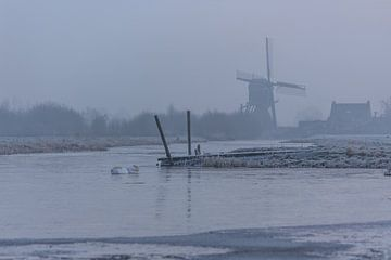 Uitslapende zwanen op een koude morgen von Stephan Neven