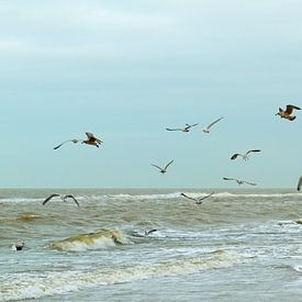 free as a bird, flying gulls at Dutch beach von Georges Hoeberechts