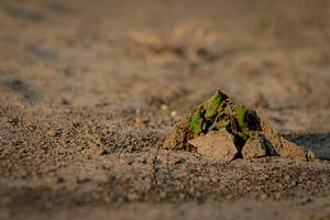 Geradewegs durch die Dürre