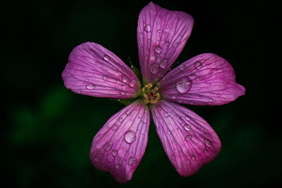 Kleine geranium van Lily Ploeg