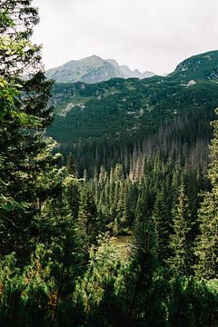 Montagnes Tatra Slovaquie III sur Suzanne Spijkers