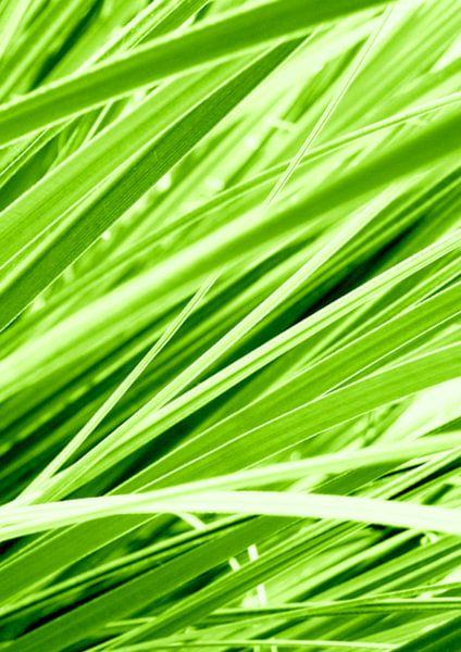 Groen! van Andrea Meyer