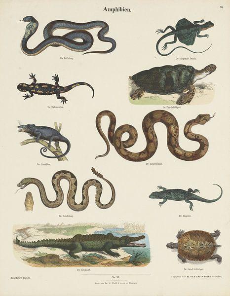 Amphibien, Ernst Fröhlich, ca. 1820 - 1843 van Vintage en botanische Prenten