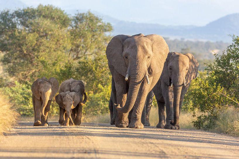 Olifanten familie roadtrip in Kruger National Park van Dennis Eckert