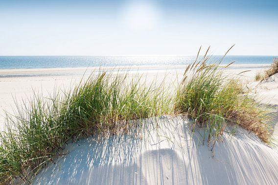 Nordseedüne im Gegenlicht van Reiner Würz / RWFotoArt
