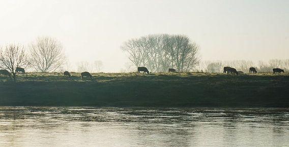 Koeien aan de Maas van Joris Pannemans - Loris Photography