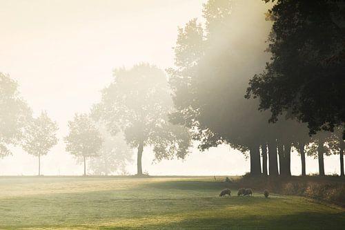 Hollands landschap met mist van