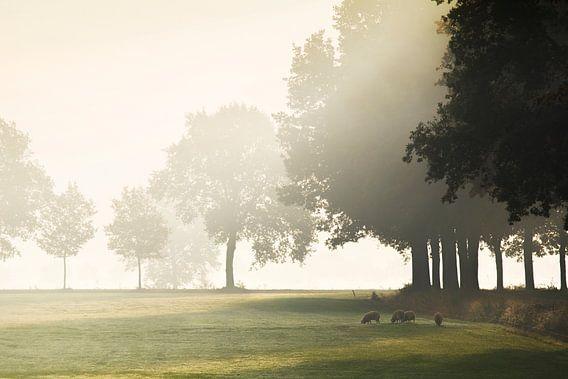 Hollands landschap met mist van Teuni's Dreams of Reality