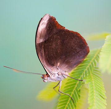 Vlinder close-up von Ingrid Ronde