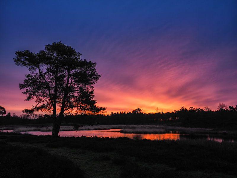 Morning colours van Lex Schulte