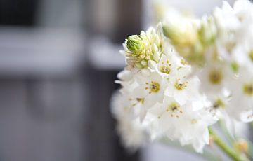 Witte bloemen in de vensterbank von Charlotte Meindersma