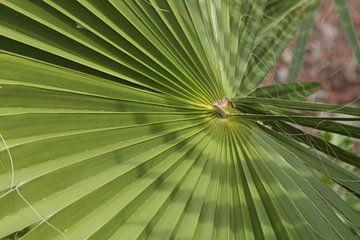 Palm von Jelle Ursem