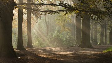 Magic Woodland (2)