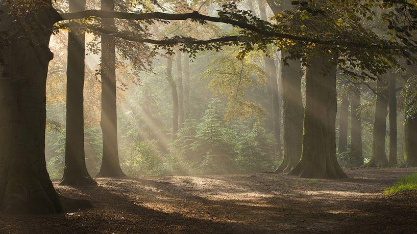 Magic Woodland (2) van Art Wittingen