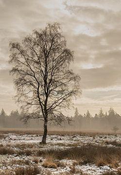 Birke im Winter von Monica de Jong