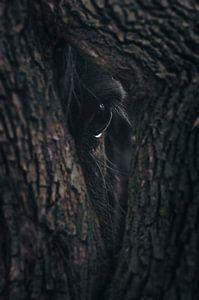Oog van de natuur
