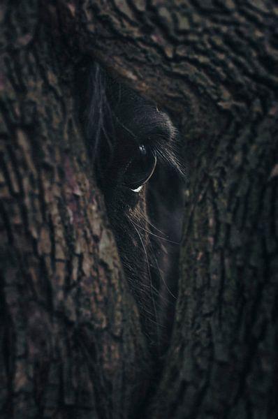 Oog van de natuur van Elianne van Turennout