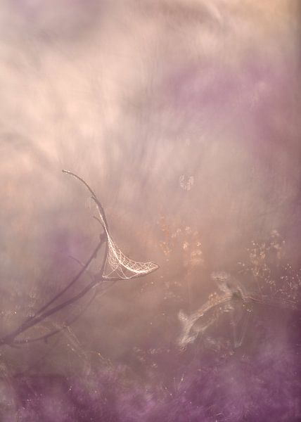 Träume einfangen von Loulou Beavers
