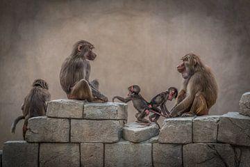 Paviane Familie von Leon Brouwer