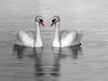 Zwei Schwäne schwimmen, Schwarz-Weiß-Foto von Rietje Bulthuis