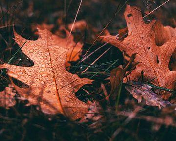 Herbstblätter im Tau von Jeroen Brasz