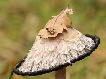 Inktzwam met lieveheersbeestje van Mariëlle Heerdt