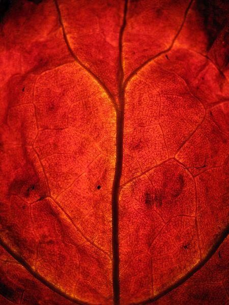 Rode herfst van Vectorific Design
