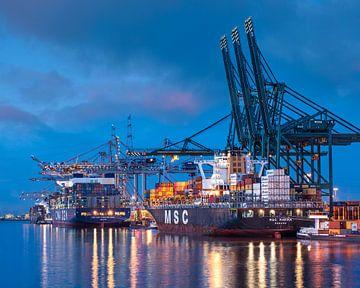 Afgemeerde containerschepen in verlichte terminal bij schemering, Antwerpen van Tony Vingerhoets