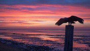 Goldener Moment für Sonnenaufgang Vlieland.