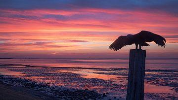 Gouden moment voor zonsopkomst Vlieland.