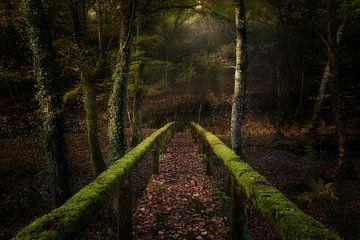 Der Weg in den Wald, Chencho Mendoza von 1x