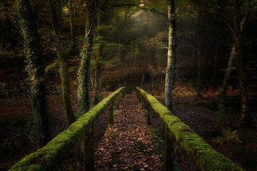 De weg naar het bos, Chencho Mendoza van 1x