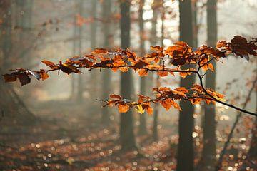 Herfstbladeren von RWNL Fotografie