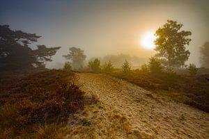 Heidelandschap zonsopkomst