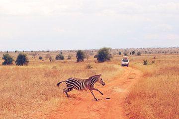 Overstekende Zebra van